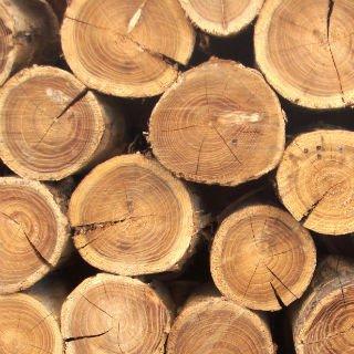 Подбор дерева для отделки бани и сауны